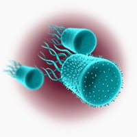 yeast-infections-s